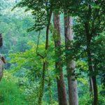 Thailandia fra trekking, natura ed elefanti